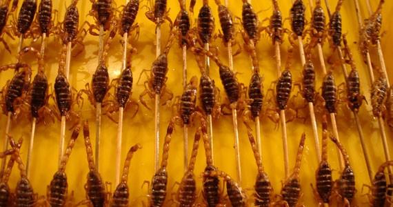 manger_insecte